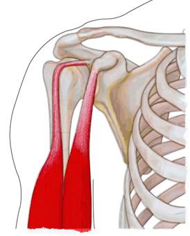 dureri de biceps și articulație artrita articulației umărului 1 grad